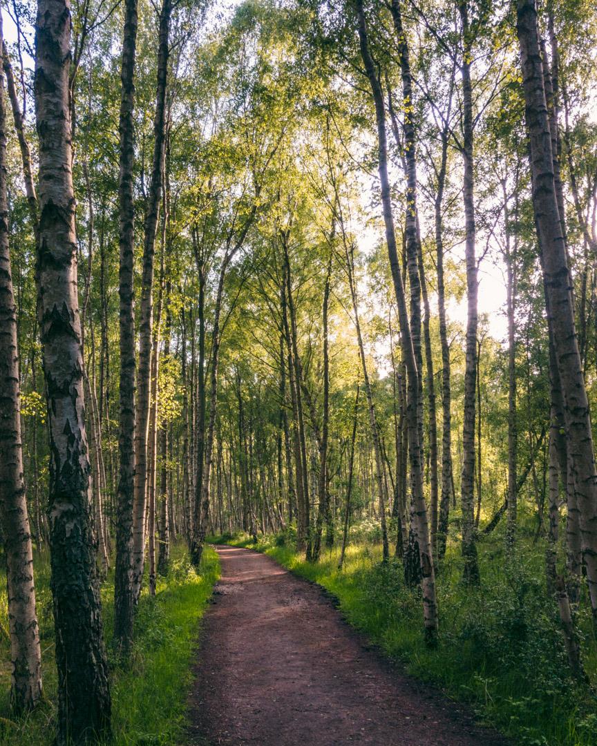 Skov Kalvebod Fælled