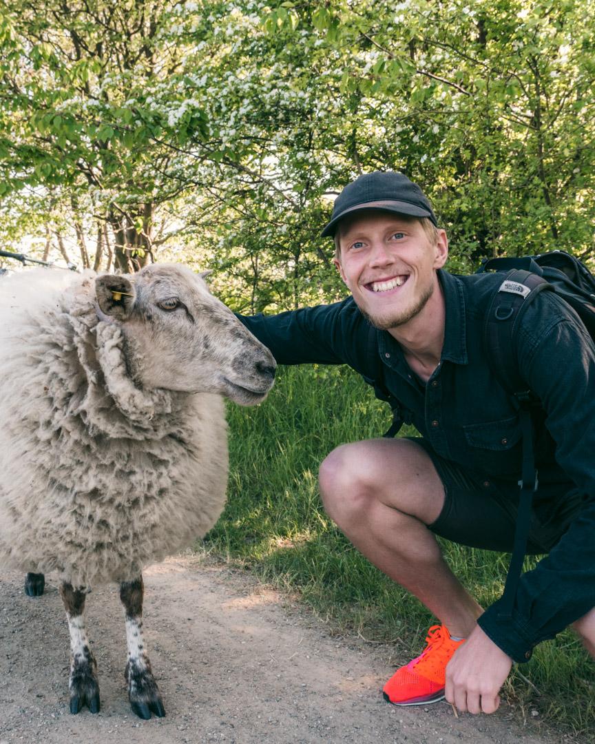 Alex og et får