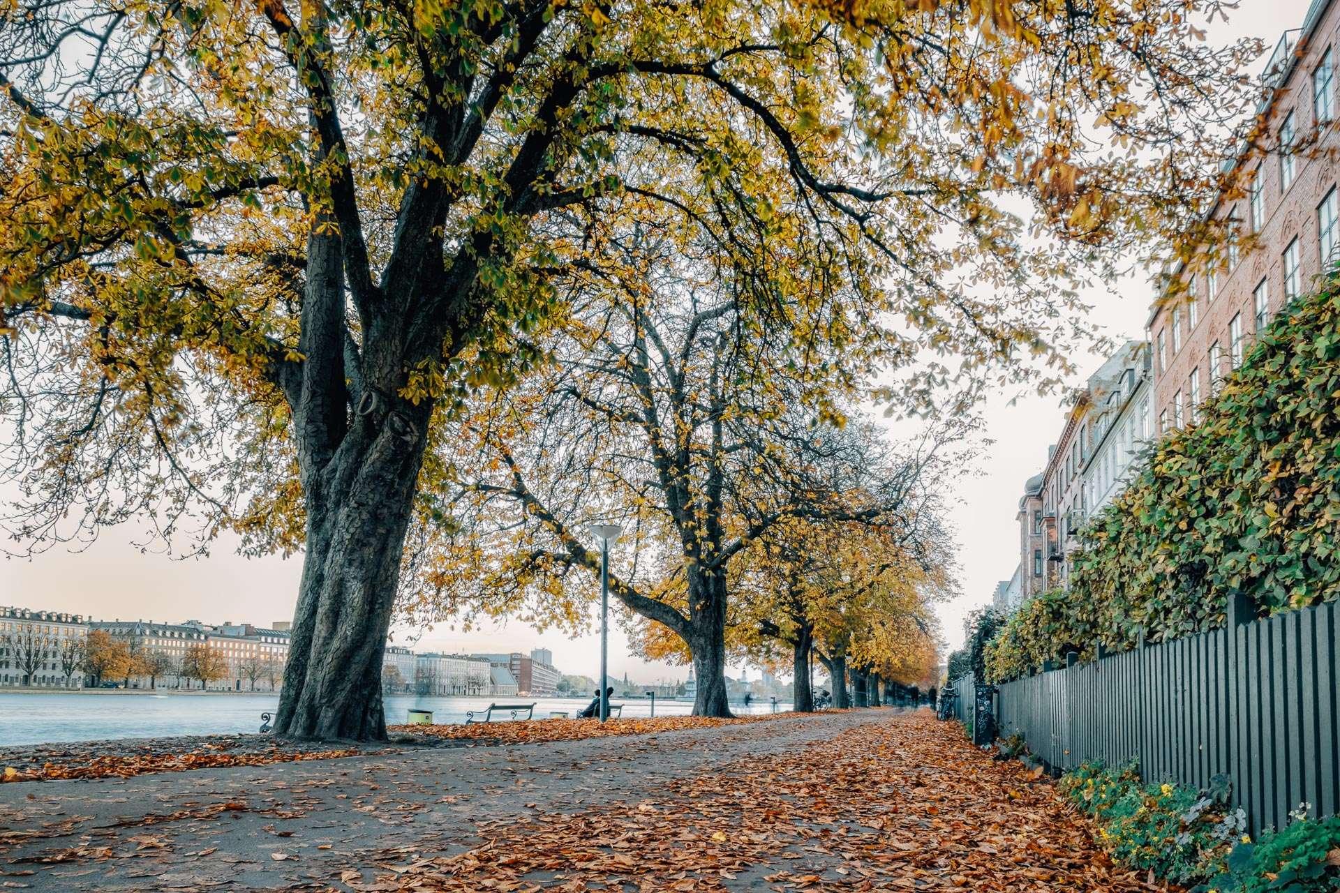 Søerne i midten af København om efteråret