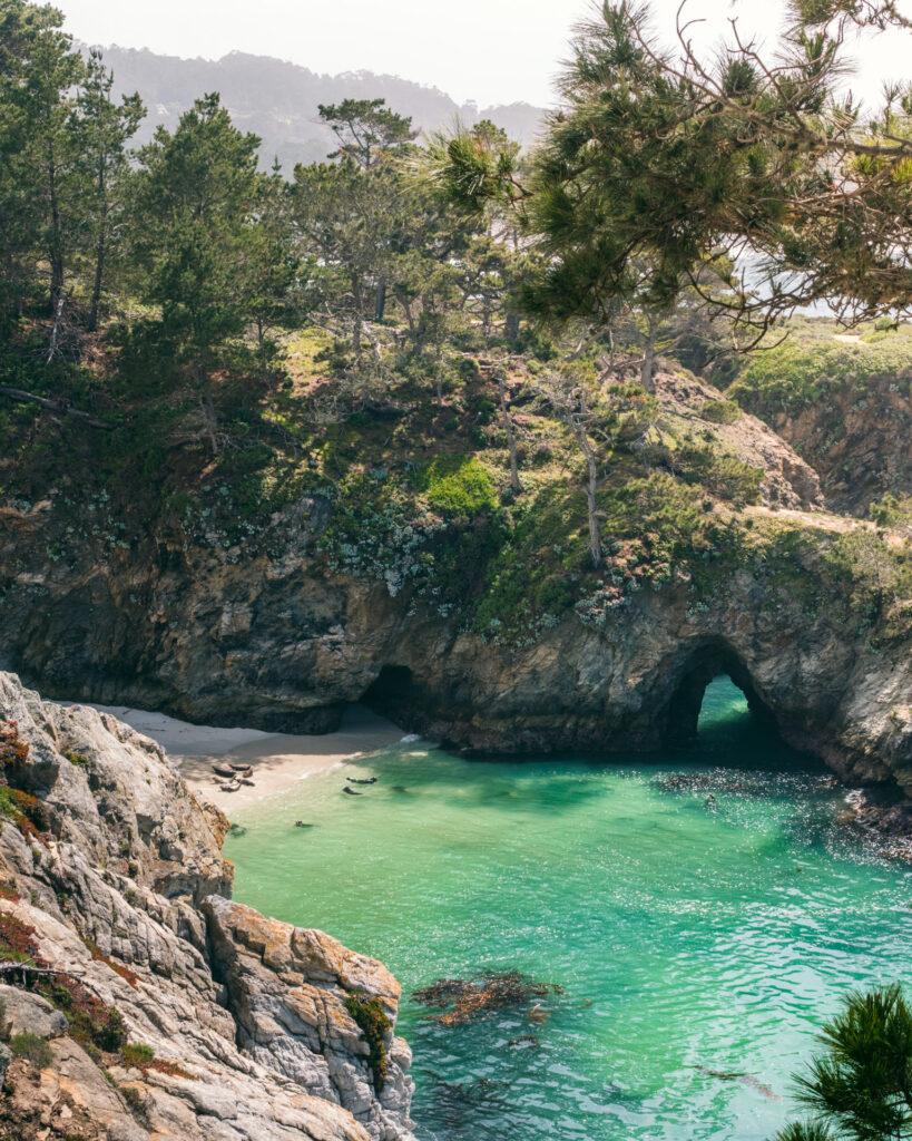 Sæler kan også godt lide flotte strande