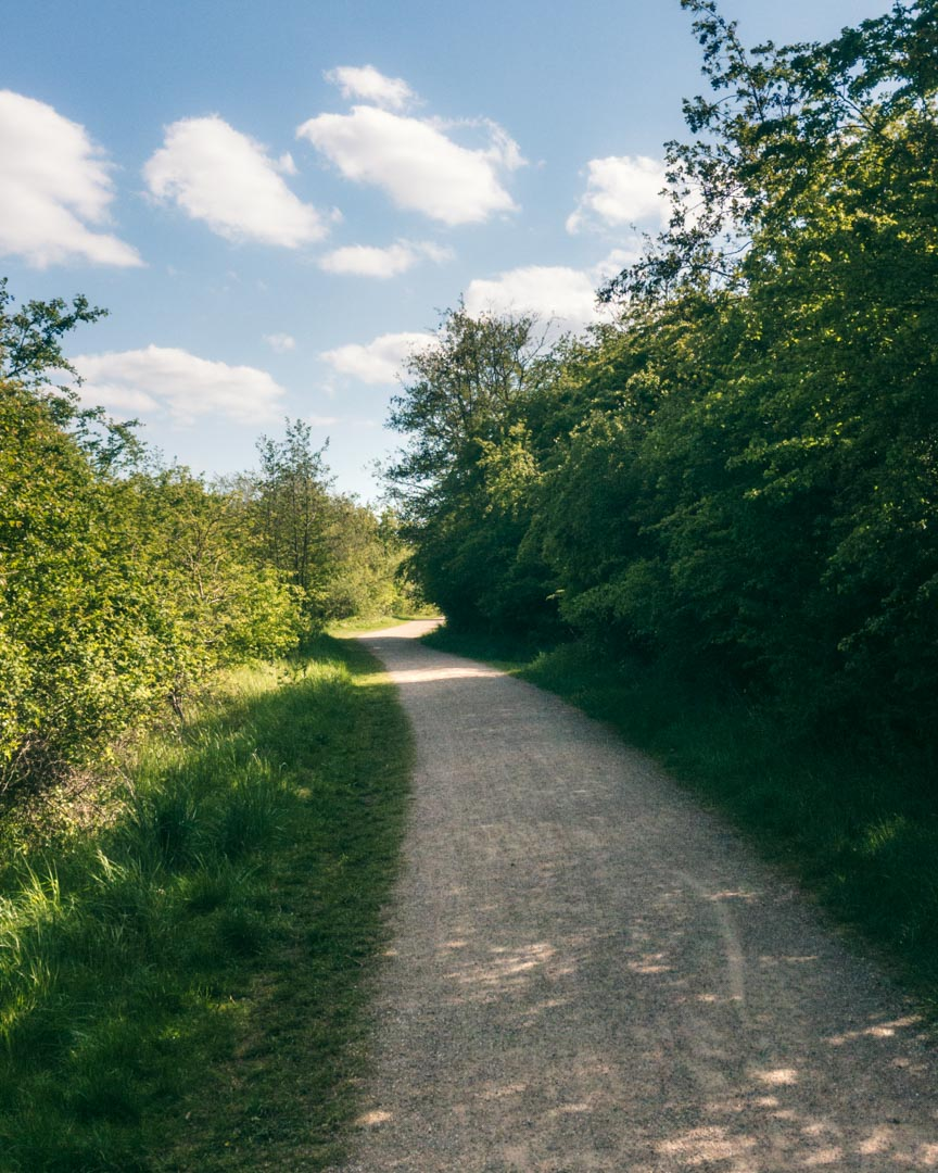 Løb i skånske skove